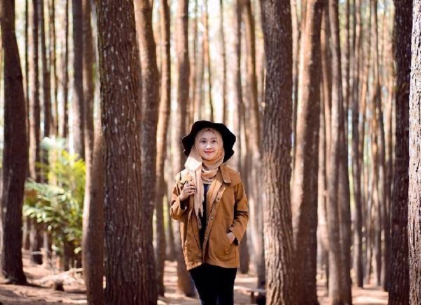 Refresh Sejenak di Hutan Pinus Mangunan Dlingo Bantul di Jogja 6