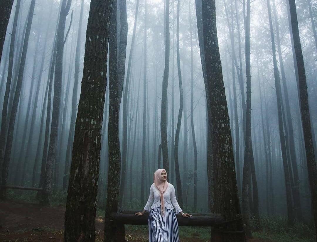 Refresh Sejenak di Hutan Pinus Mangunan Dlingo Bantul di Jogja 3