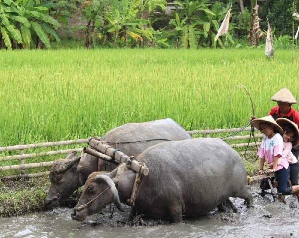 Desa Wisata Tembi Bantul - Wisata Dan Rekreasi Sambil Belajar Budaya Jogja 14